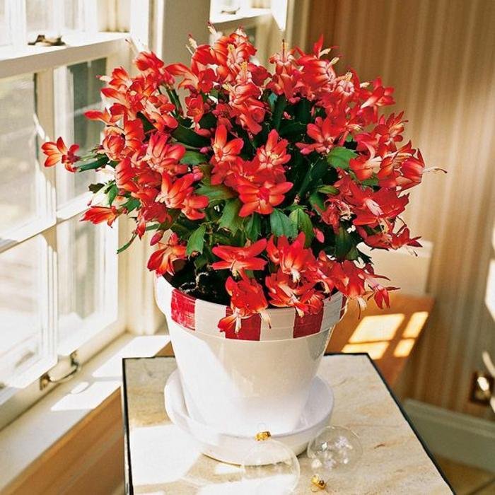 savourez la beaut de la plante d int rieur dans notre galerie. Black Bedroom Furniture Sets. Home Design Ideas