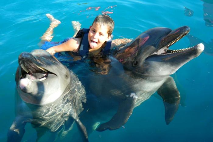 nage-dauphins-dans-la-mer-ou-piscine-dauphine-jolie-deux-dauphines