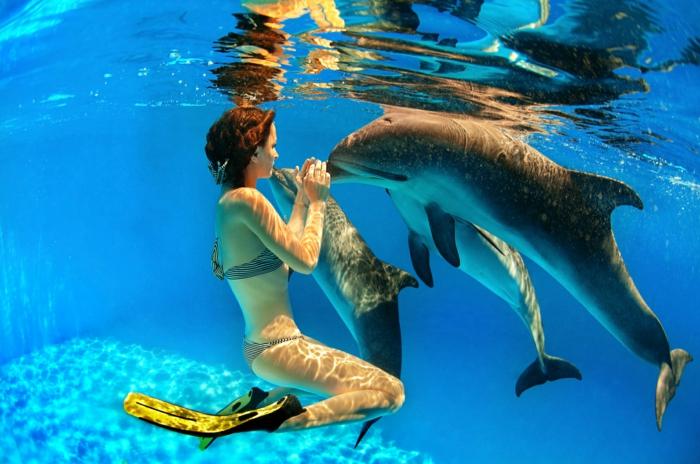 R vez vous de nager avec les dauphins - Nager dans la piscine ...