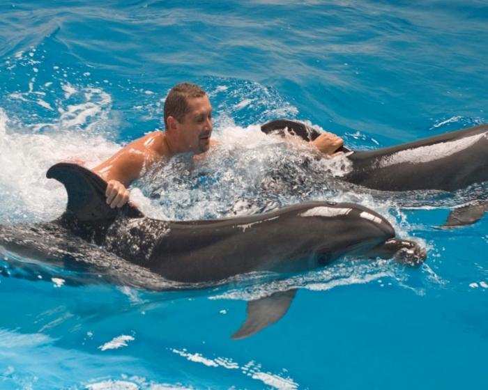 nager-avec-les-dauphins-en-france-europe-cadeau-original-idée-activité-piscine