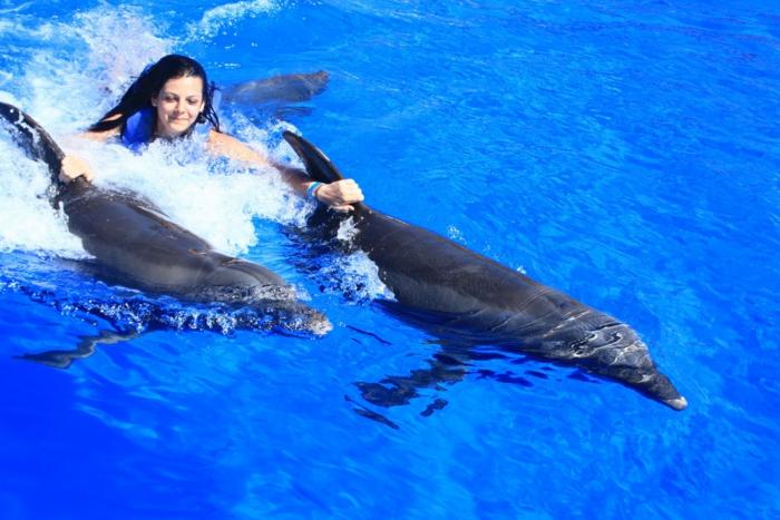 originale-cadeau-coupon-nager-avec-les-dauphins-france-mer-le-bleu
