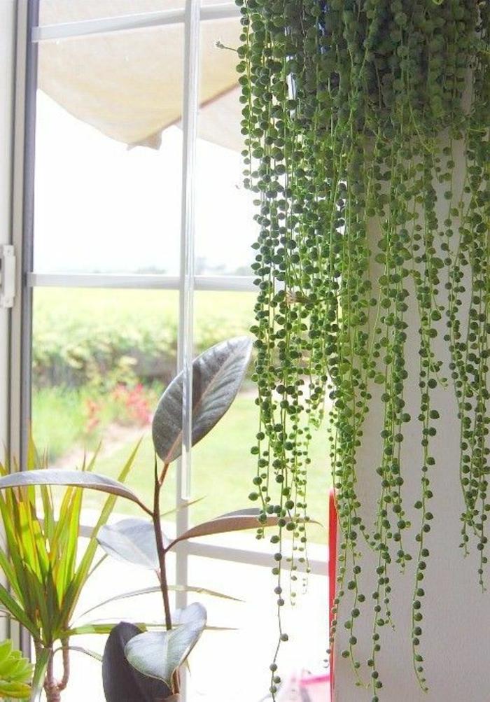 Savourez la beaut de la plante d int rieur dans notre for Plantes d interieur decoration