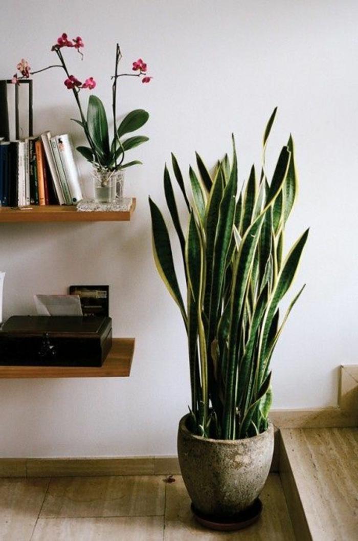 plante-d-intérieur-pour-decorer-chez-vous-avec-plante-d-interieur-depolluante-jolie-idee