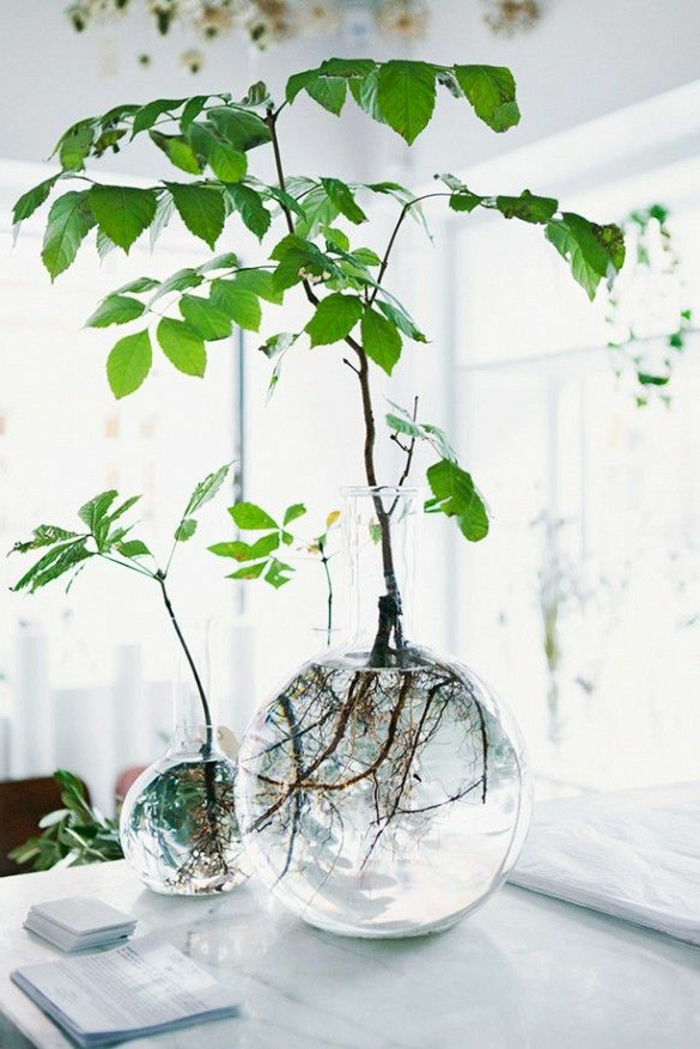 plante-d-intérieur-pour-decorer-chez-vous-avec-plante-d-interieur-depolluante
