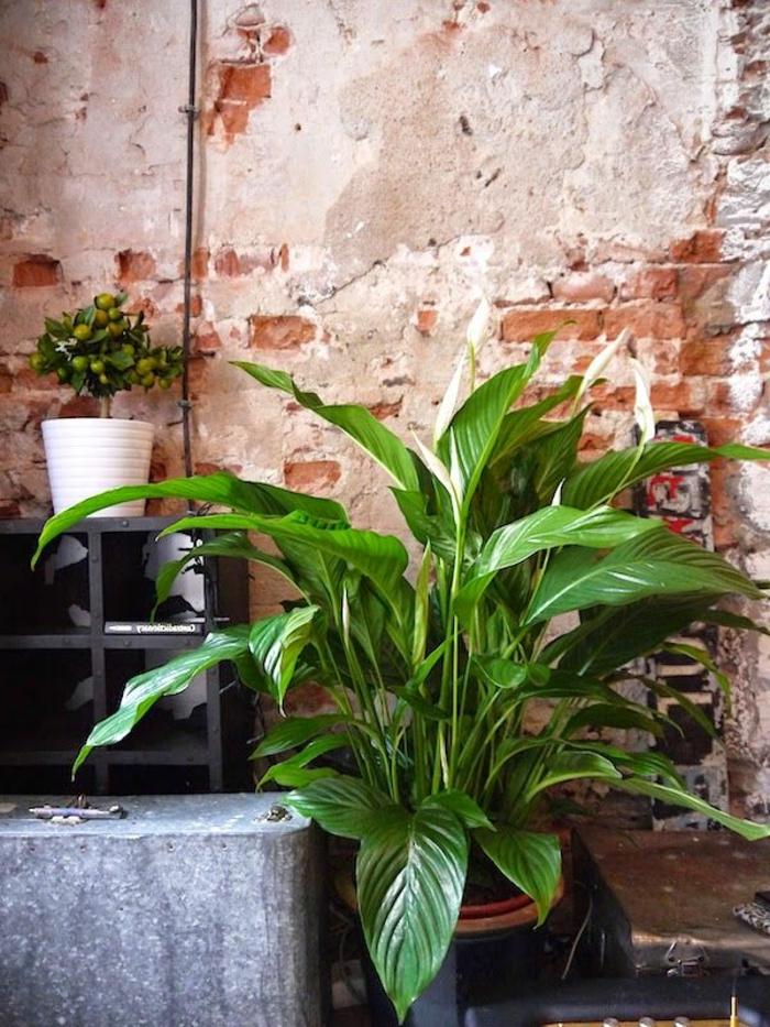 plante-exotique-intérieur-plante-d-intérieur-vert-pour-decorer-l-interieur-chez-vous