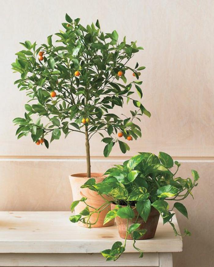 plantes-d-intérieur-fleuries-comment-bien-decorer-l-interieur-avec-plante-exotique-intérieur