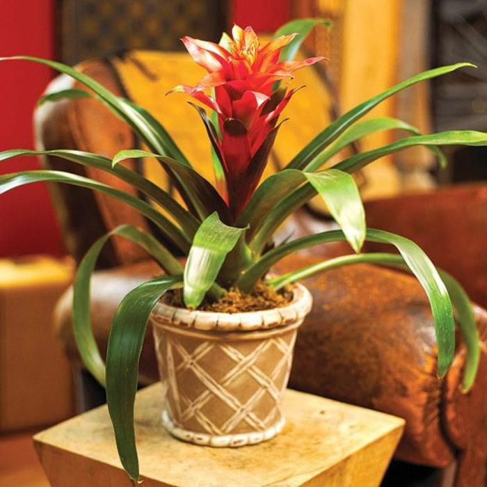 plantes-d-interieur-depolluantes-plante-verte-d-intérieur-jolie-fleur-rouge-pour-chez-vous
