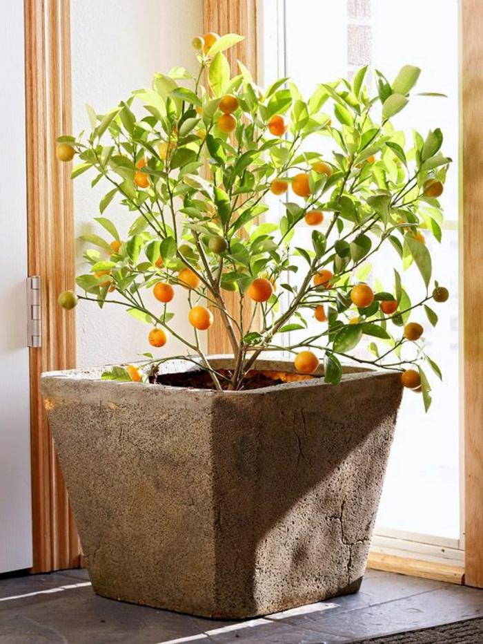 plantes-d-interieur-originales-plantes-d-interieur-fleuris-jolie-plante-exotique-intérieur