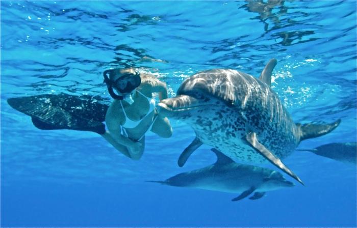 réaliser-son-rêve-nager-avec-les-dauphins-marinelan-de-dedans
