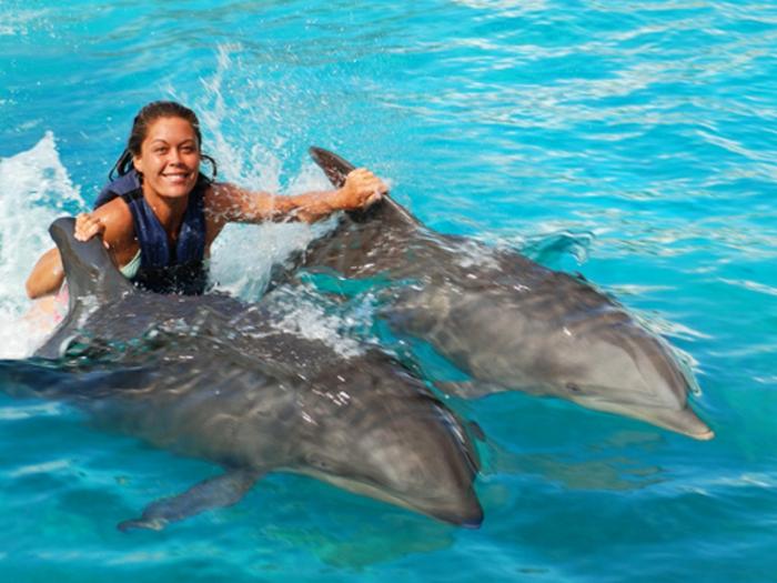 R vez vous de nager avec les dauphins for Nager avec les dauphins nice