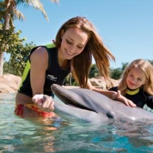 Rêvez vous de nager avec les dauphins?