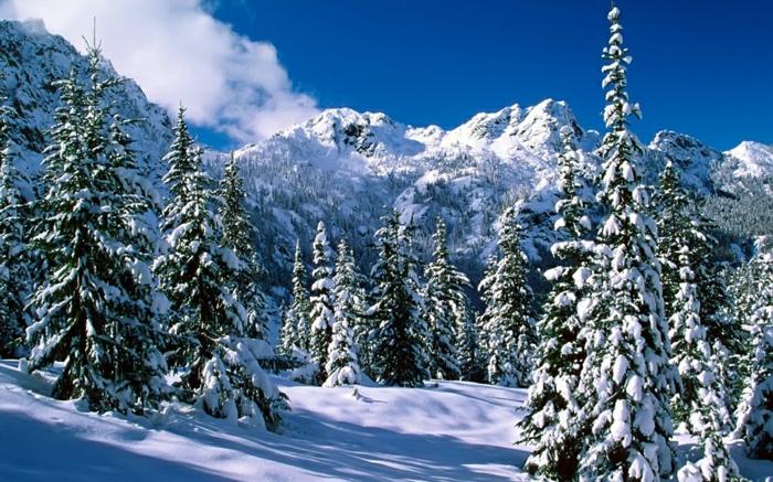 station-de-ski-alpes-image-nature-jolie-photo-professionnelle-pins