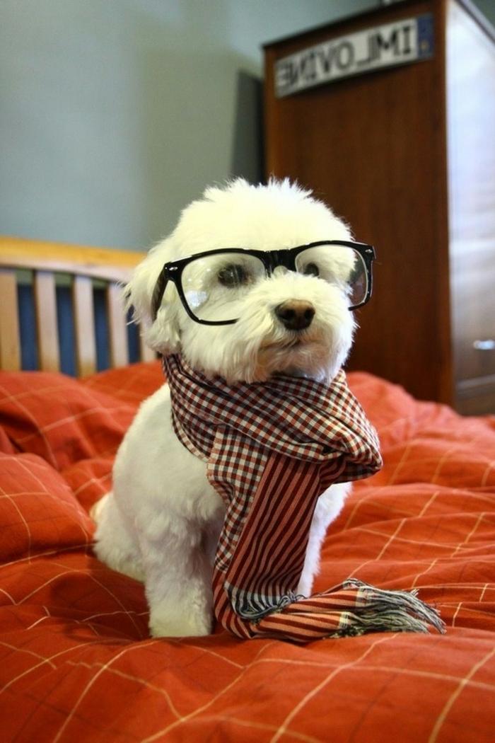 style-hipster-pour-les-hipsters-idées-tenue-chien-preppy