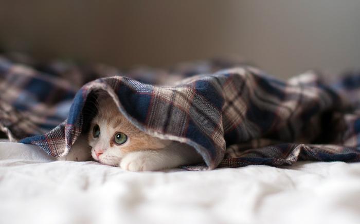 1-chat-sous-couverture-ambiance-cosy-beauté-dans-la-chamber-chat-maison-cosy