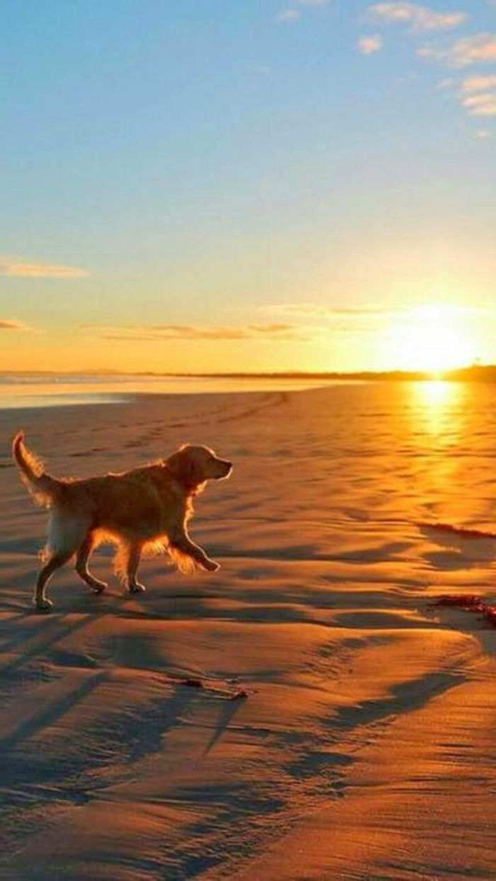 2-race-de-chien-taille-moyen-comment-choisir-son-chien-jolie-idee-pour-golden-retriver