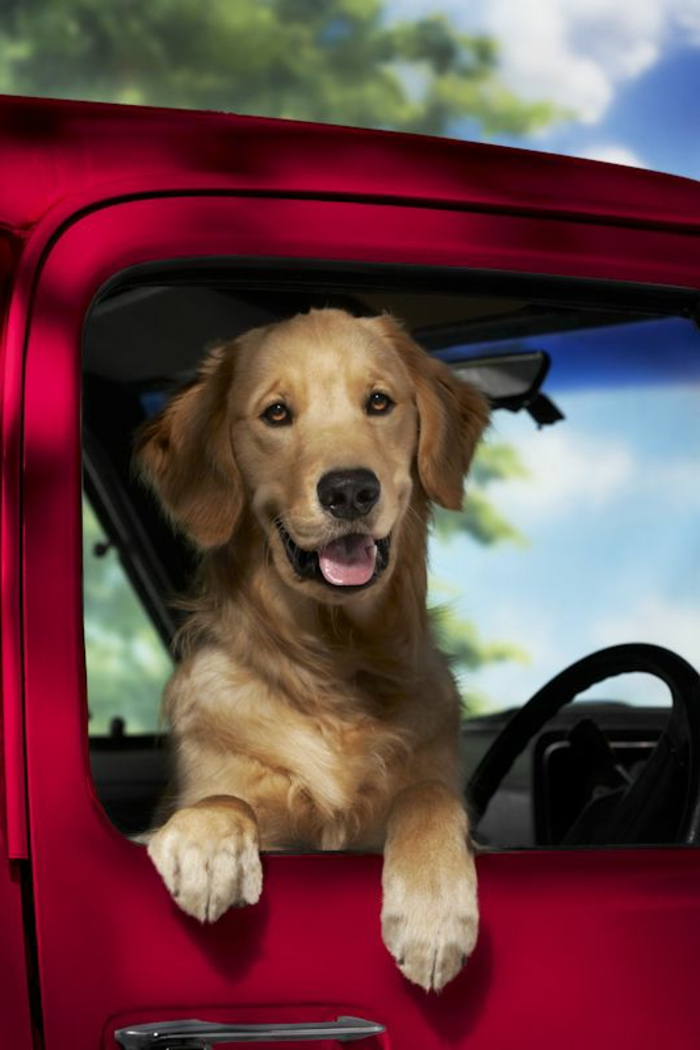 2-race-de-chien-taille-moyen-quel-chien-choisir-pour-vivre-ensemble-dans-la-voiture