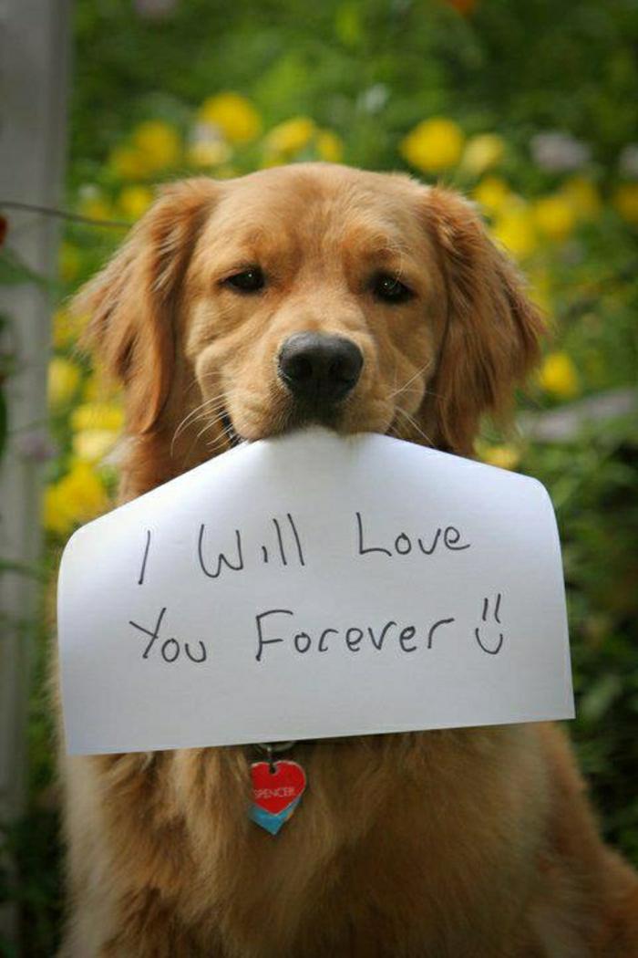 2-toute-les-races-de-chein-savourer-la-beauté-des-chiens-quel-race-de-chien-choisir-pour-la-maison