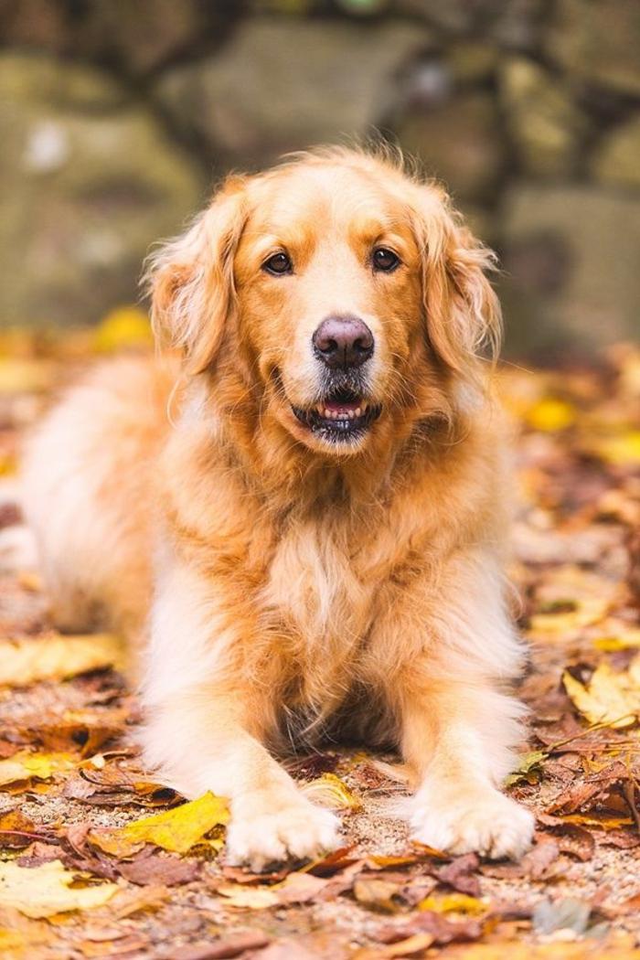 2-toute-les-races-de-chein-savourer-la-beauté-des-chiens-quel-race-de-chien-choisir