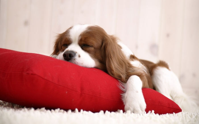 Faire-une-chambre-belle-et-cozy-avec-chien-et-coussinet-décoration