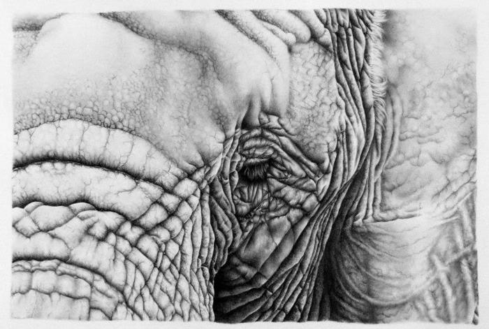 art-graphique-design-magazine-art-graphique-éléphant
