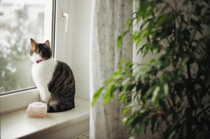 faire-une-chambre-belle-et-cozy-avec-décoration-chat