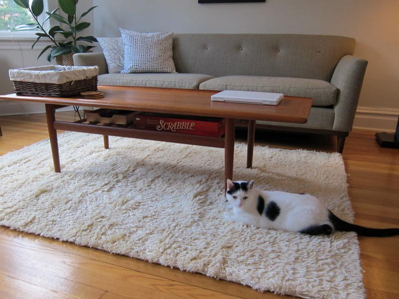 le-chat-sur-le-tapis-salon-shaggt-blanc-canape-beige