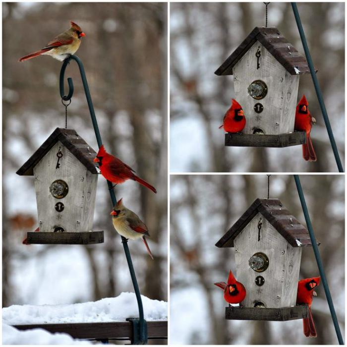 cabane-à-oiseaux-belles-maisons-pour-oiseaux-peintes-blanches
