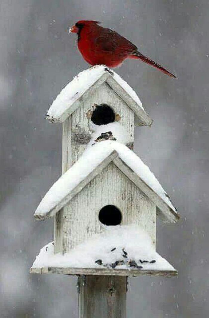 cabane-à-oiseaux-belles-nichoirs-d'oiseau-en-hiver