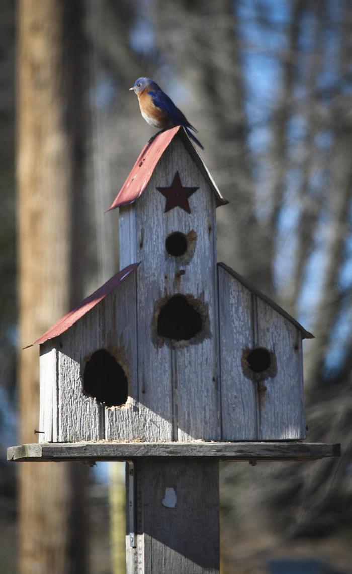 cabane-à-oiseaux-juchée-dans-la-forêt