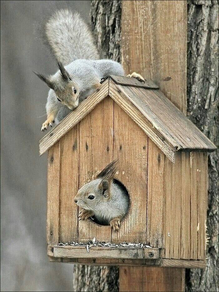 cabane-à-oiseaux-maison-pour-oiseaux-et-écureuil