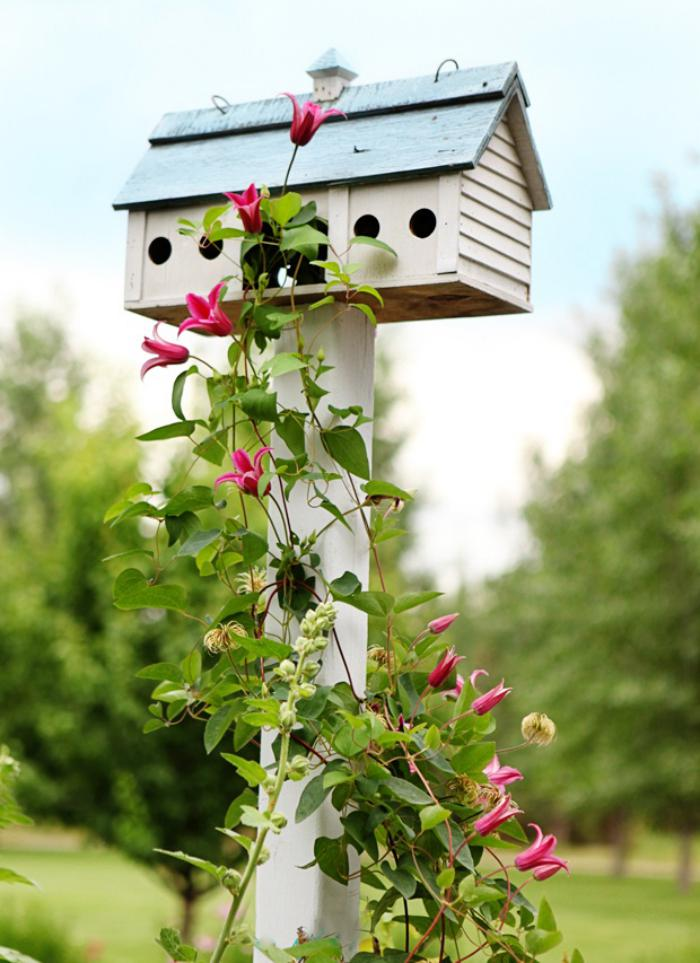 cabane-à-oiseaux-nichoir-d'oiseaux-et-fleur-magnifique