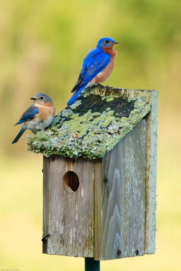 cabane-à-oiseaux-petit-nichoir-pour-oiseaux