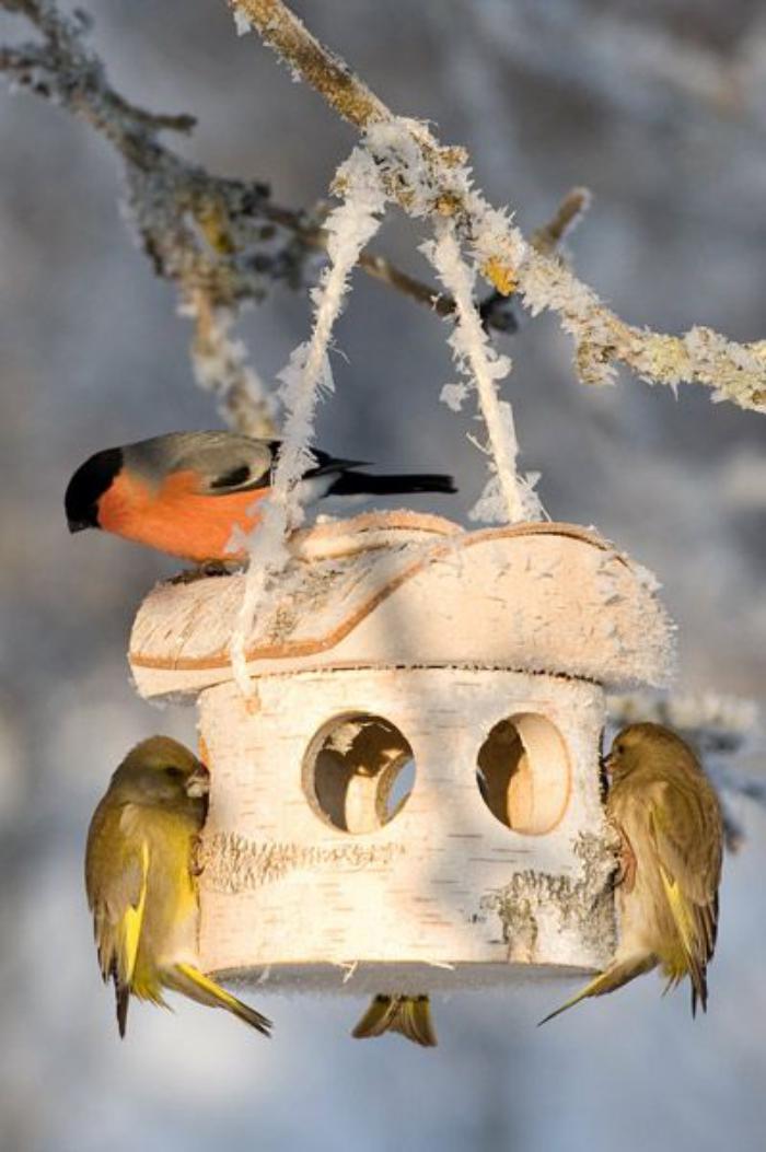 cabane-à-oiseaux-petite-maison-d'oiseaux