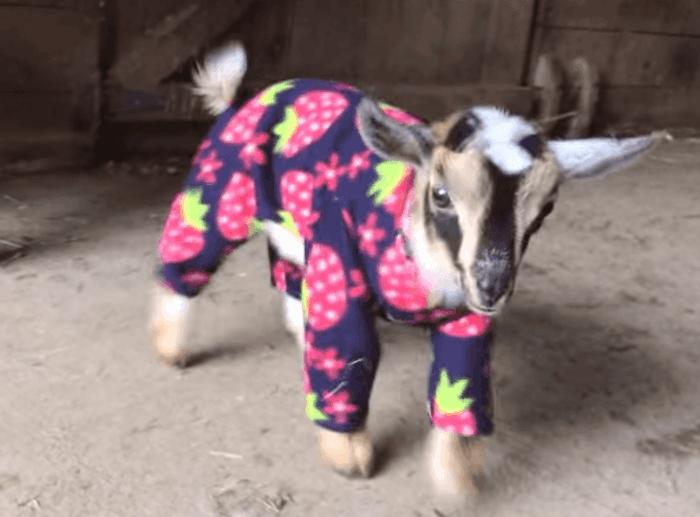 idée-quell-pyjama-garçon-choisir-pajama-les-pyjamas-voir-chevreau