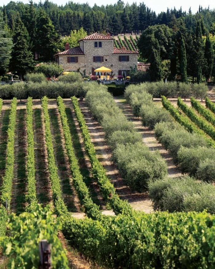 1-cuillo-séjour-en-toscane-les-champs-en-italie-champs-de-vin-maison-italienne