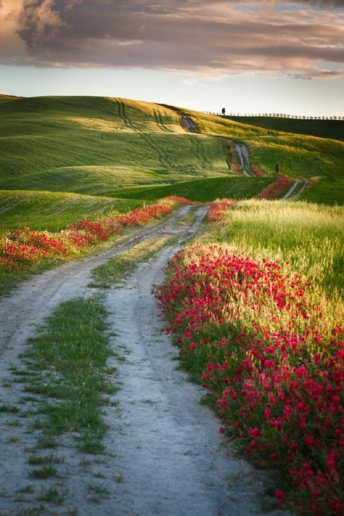 1-les-champs-de-la-toscane-séjour-en-toscane-visiter-la-toscane-beaux-paysage