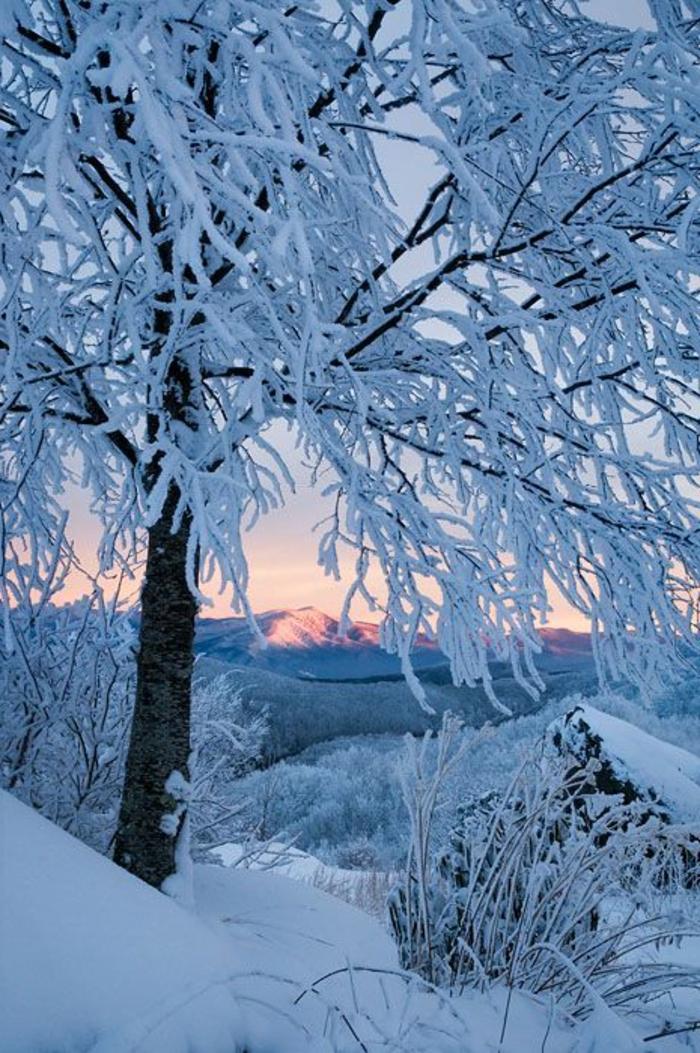 Cool-fond-d-ecran-hiver-paysages-de-noel-éclatant-un-arbre-glissé