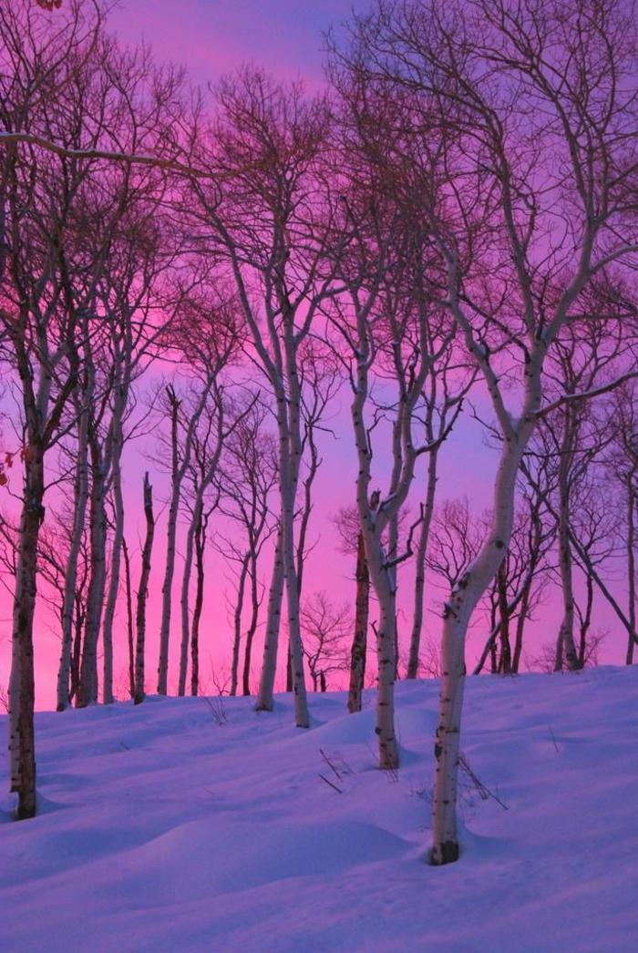 Eclatant-fond-ecran-hiver-photo-de-montagne-image-hiver-gratuite-arbres