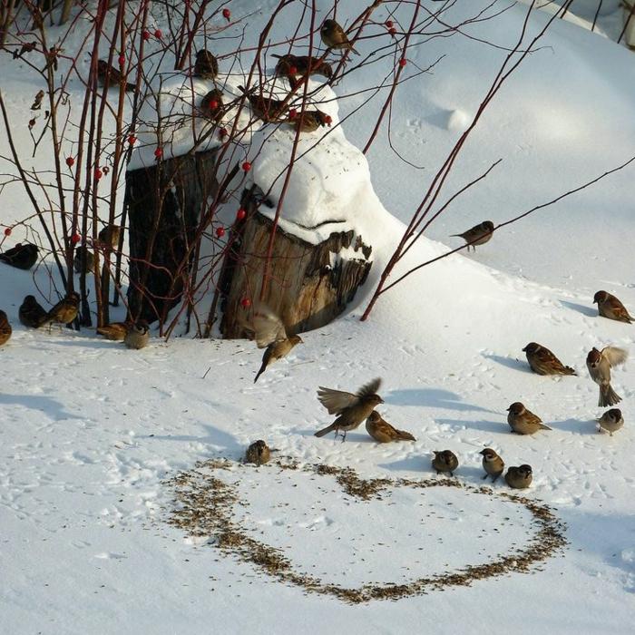 Eclatant-fond-ecran-hiver-photo-de-montagne-image-hiver-gratuite-oiseaux-paysage-d'hiver