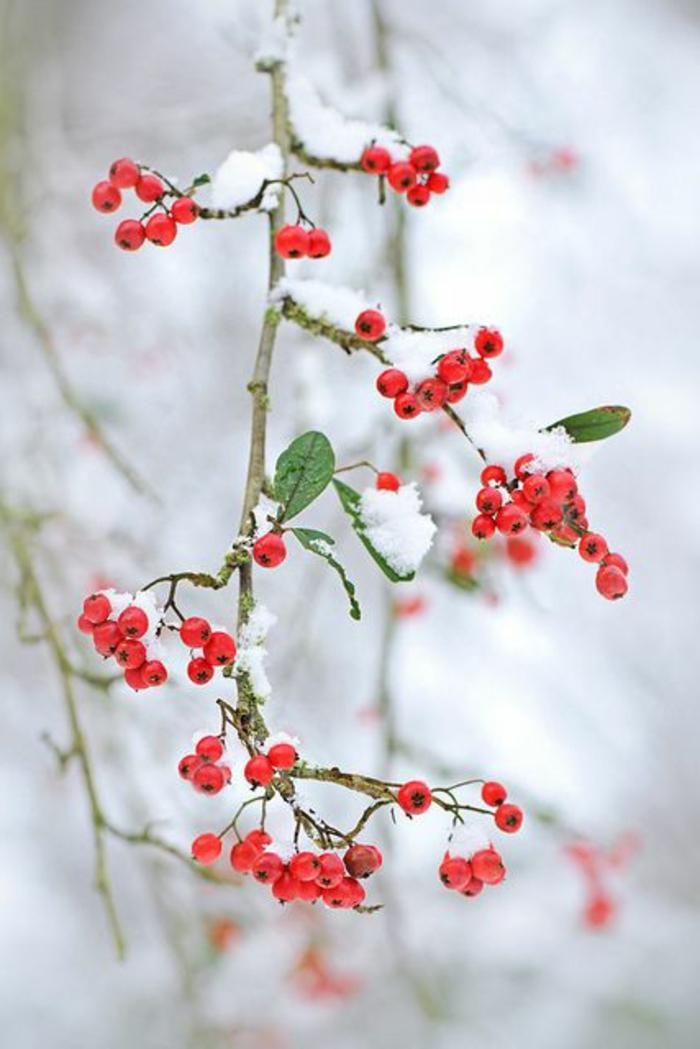 Formidable-photo-montagne-photos-paysages-paysages-d-hiver-rouge