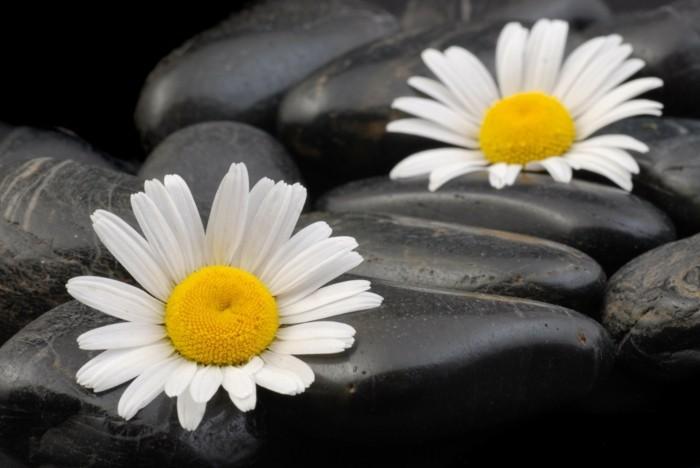 Galets-décoratifs-fleurs-pour-la-maison-idées