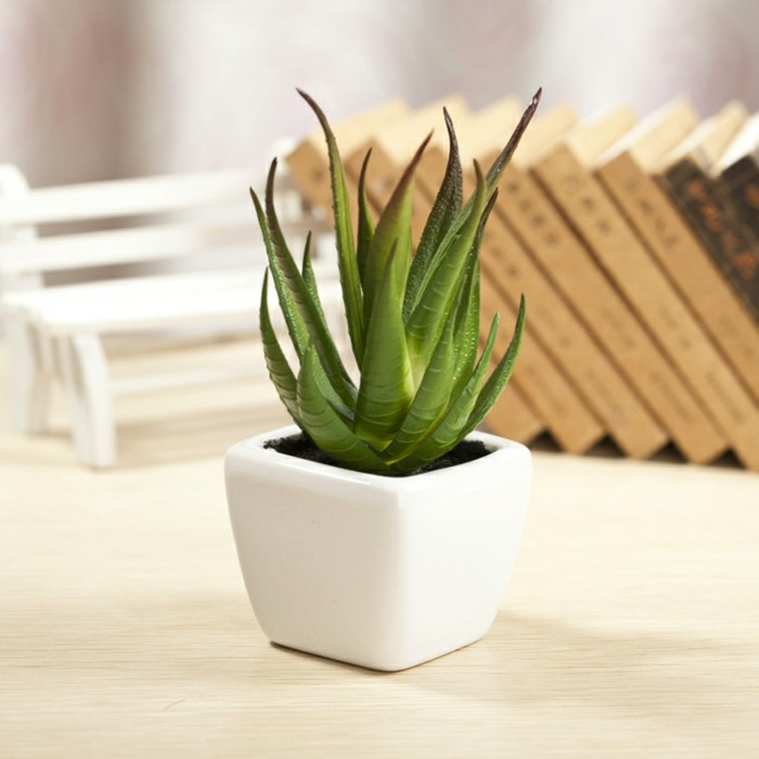 Plante-verte-dépolluante-d'intérieur-plantes