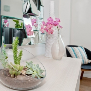Plantes vertes d'intérieur - 40 propositions pour changer votre ambiance