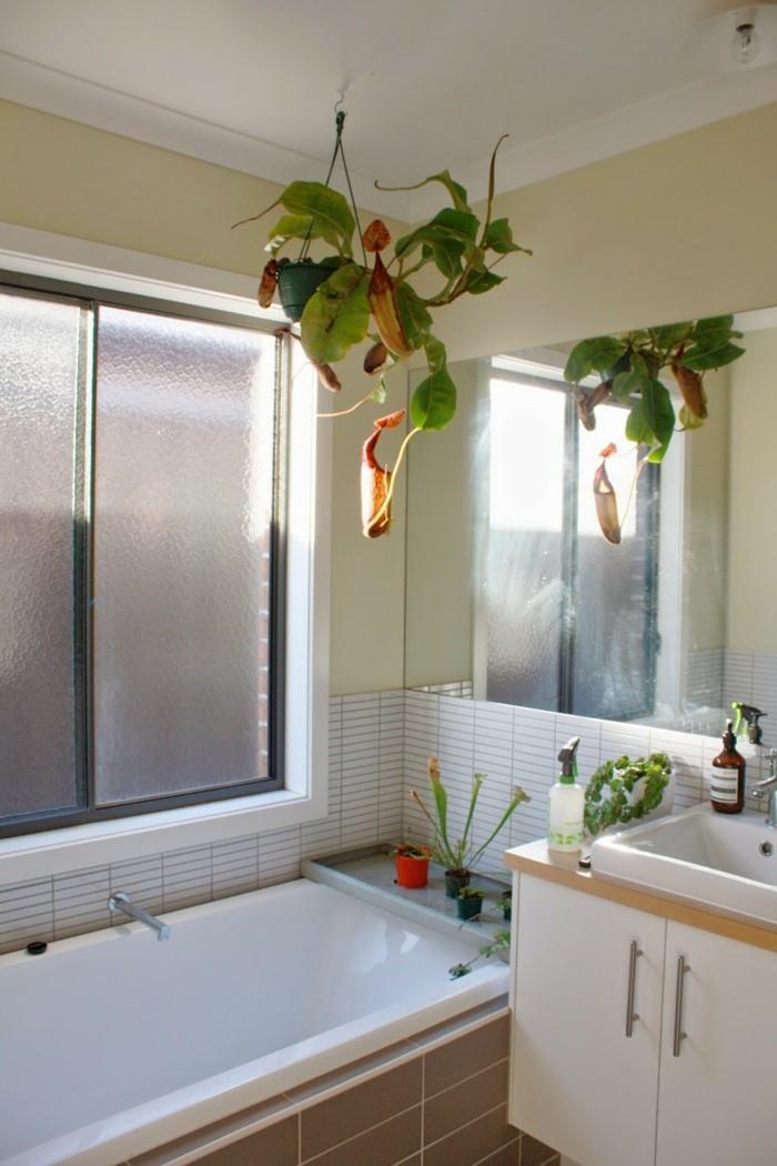 Plantes-vertes-dépolluantes-d'intérieur-plante-verte-dépolluante