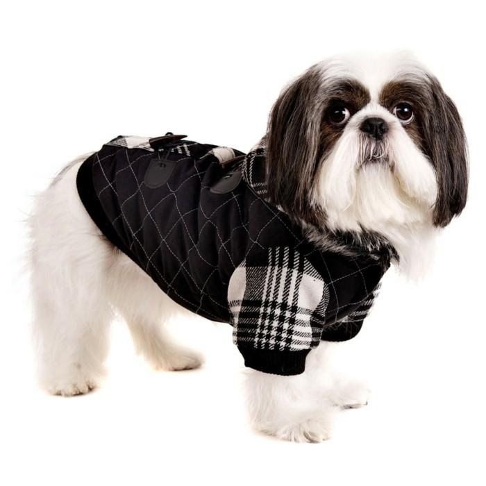 On vous pr sente v tement pour chien en 40 photos remarquables - Site pour chien pas cher ...