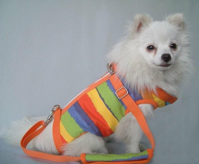 Vetêments pour-chien-chihuahua-vetement-pas-cher