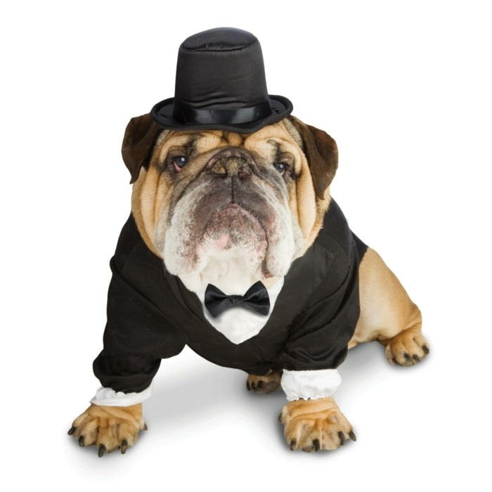 Vetement-chien-noel-pas-cher-vetêment-pour-chien
