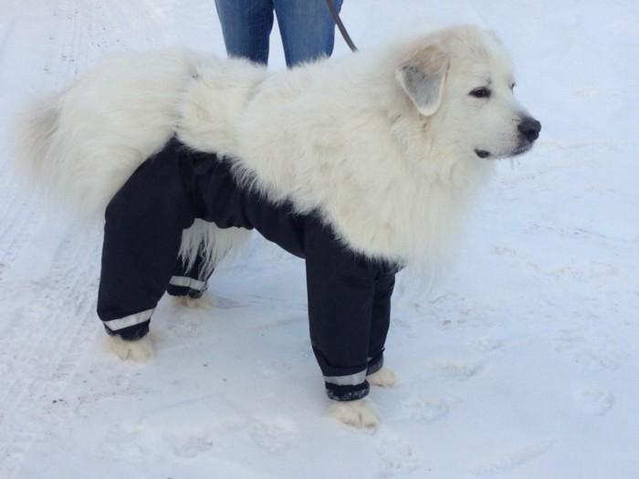 Vetement-chien-noel-vetêments-chien-pour-pas-cher