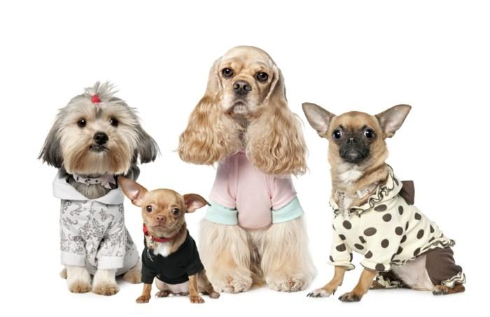 Vetement-chien-noel-vetement-pour-chien-noel-vetêments