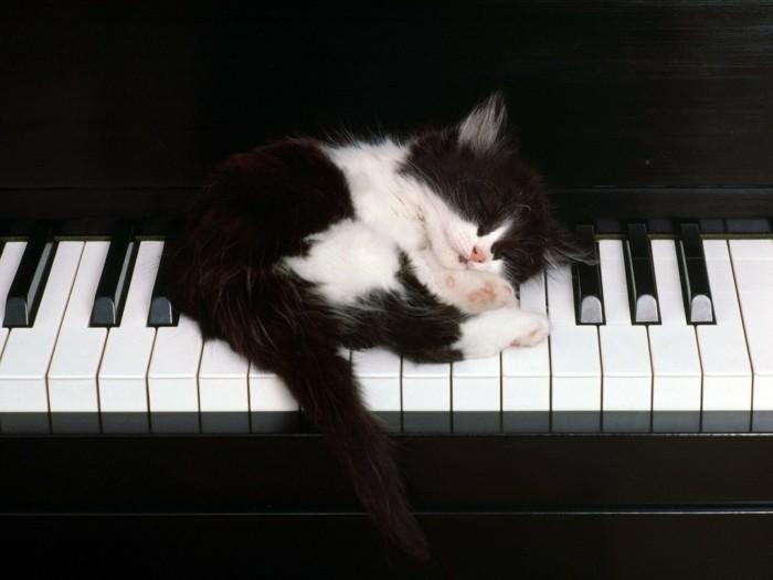 admirable-chouettes-chatons-trop-mignons-les-photo-de-chat-
